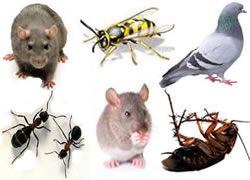 pest controllers for rats mice wasps flies pigeons pest birds ants insects cockroaches